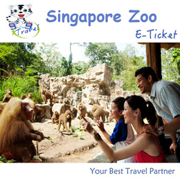【99 TRAVEL】Singapore Zoo- Admission with Tram ride E-ticket One day Pass
