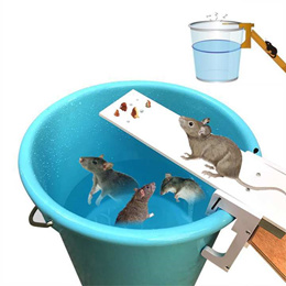 Walk The Plank Mouse Trap - Trap For Mice Rats Rodents Other Pests - Humane Non Poison - Best Trap