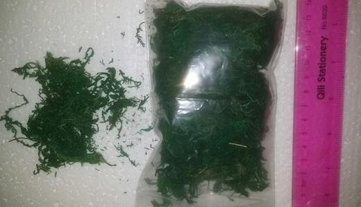 Qoo10 Artificial Moss Dry Mosses Grass Flower Arrangement Florist Floral Spo Tools Gardenin