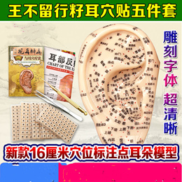 Ear ear vaccaria seeds bean paste type Auricular magnetic acupressure massage ear ear model probes