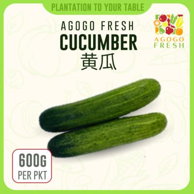 30 Cucumber 黄瓜 (600g)