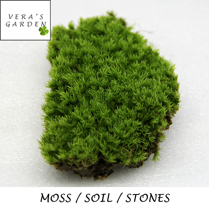 Wonderful [ Live Moss / Soil / Stones ] Terrarium Accessories / Succulent Deco /  Activated Carbon
