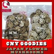 Thick Japan Flower Mushrooms (4-5cm) High Quality ! BESTSELLER!