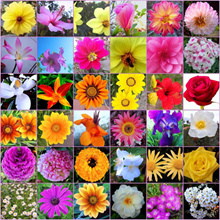 Flower Seeds Home Pot Gardening (Various Type of Organic Flower Seed) Premium Grade AAA Quality Seeds with Planting Method Indicate Date of Seed Freshness for each packet