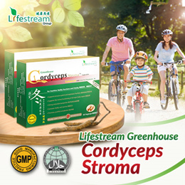 [2FOR$99] [Lifestream] Premium Cordyceps Stroma Capsule [Made In Singapore] ★Award-Winning Cordyceps