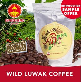 World Finest Coffee! Gayo Luwak Coffee OFFER!