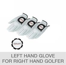 Kirkland Signature  Golf Glove 3-Pack and Chip