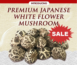 Whole Sale Price! Premium Quality 500G/1KG Thick Japanese White Flower Mushroom ( 4-5 cm)