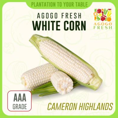 CH05 White Corn