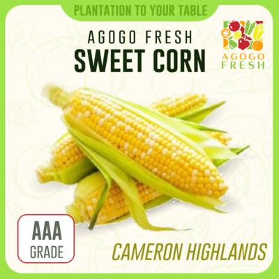 CH05 Sweet Corn