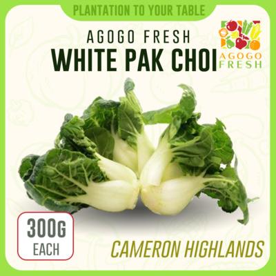 CH08 White Pak Choi