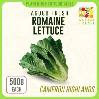 CH17 Romaine lettuce