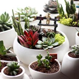 ◤White Porcelain small◥ Terrarium DIY ★ Container ♡ Mini Garden Planter ♡ Storage ♡ Pots