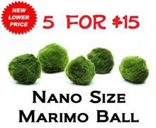 Nano Marimo Moss Ball 5 for $15 IMPORTED FROM JAPAN Live Aquarium Aquatic Plant for Fish/shrimp Tank betta terrarium