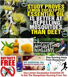 [Kiellp]1 for 1 Promo Lemon Eucalyptus DIY 10ml Essential Oil Mosquito Insect Bug Homemade Repellent