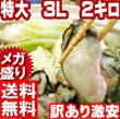 ★タイムセール限定!!★広島県産牡蠣【特大3L2キロ】訳ありだけど味は本物!! カキフライ、牡蠣鍋なんでもOK!! 1キロ袋に1.1~1.2㎏入っています。激安2キロで2.2kg~2.4kgガ盛り激安、送料無料