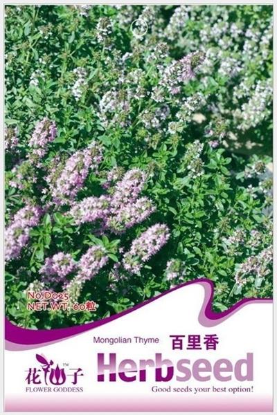 1 Bag 60 Seeds Mongolian Thyme Thymus mongolicus Seed