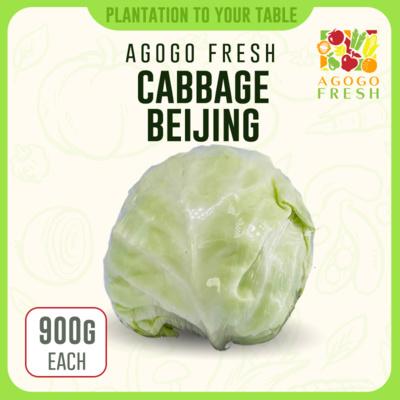 Cabbage beijing 北京包 (900g)