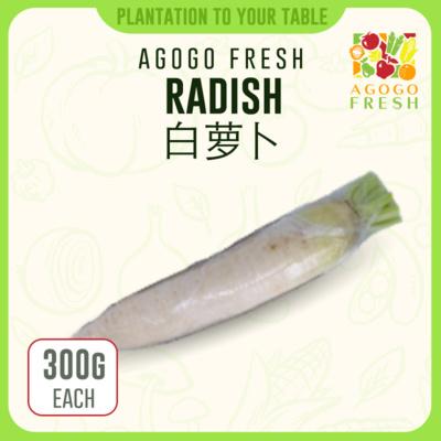 15 Radish 白萝卜 (400g)