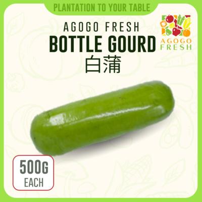 17 Bottle Gourd 白蒲 (600g)