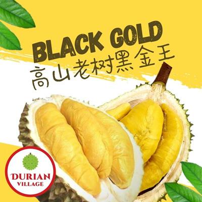 BLACK GOLD [ 高山老树黑金王 ]   ~ 400g