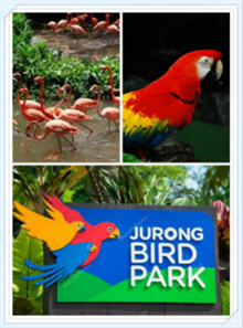 【Jurong Bird Park】Bird Park with Tram Ride Included  electronic e tickets one day pass 飞禽园