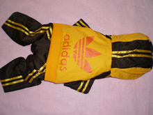 Doggy outfit by Addidas