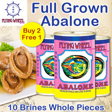 ◆BUY 2 FREE 1◆ 3 CANS Flying Wheel Abalone 10pcs in Brine - FULL GROWN!