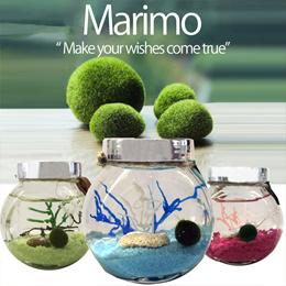 [CHRISTMAS GIFT]♥MARIMO DIY Gift Set♥ Name Your Marimo Free! Personalised Gift Set! Good Luck Charm