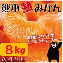 【送料無料】大容量8kg!! 温暖なミカンの本場、熊本からコクのある甘~いミカンを、大容量8kgでお届けします!! 8kg箱を送りしますので、家族様でのシェアや、御家族の多いお客様におススメ