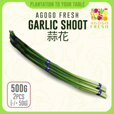 Garlic Shoot 蒜花 (2pcs) 400g
