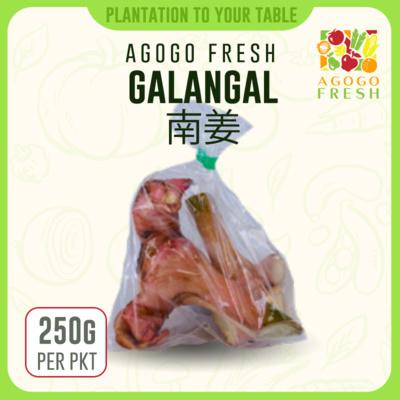 24 Galandal 南姜 (250g)