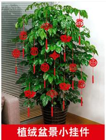 Red Chinese Yixing rectangulaire Zisha Mame shohin Bonsai pot 9.5x5.5x3cm